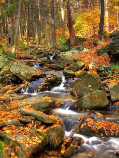 beautiful stream and fallen leaves