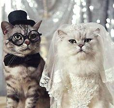 cat wedding Themarriedapp.com hearted <3                              …