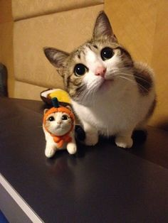 Cat and its friend
