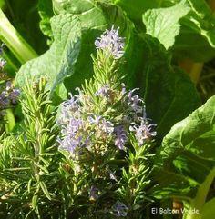 15 plantas que transmiten energía positiva y buena suerte | Cuidar de tus plantas es facilisimo.com