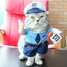 Do you want your own Traffic Policeman? Well now you can with this adorable costume. Perfect for #cats 🐱 or #dogs 🐶, for #halloween 🎃 or just for fun. This is easy to put on and comfortable for your pet to wear which means you will be able to get better photos to share with your friends on social media. We have the best quality pet costumes so rest assured you won't be disappointed with your purchase. #petcostume #dogcostume #catcostume #petsupplies #funnypets Funny Costumes, Dog Coats, Your Pet, Pet Supplies, Funny Animals, Fancy, Disappointed, Pet Products