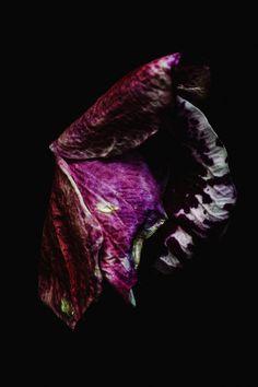 Billy Kidd - Beautiful Decay | Patternbank