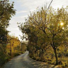 #road #village #musato #musatophotography #bestoftheday #instacoll #exposure #instamood #photooftheday #picoftheday #instadaily #igers #instalike #instagood
