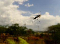 Ruim - invasão dos insetos durante o expediente... rs
