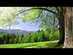 Meditazione guidata di Louise Hay sulla guarigione e per vivere serenamente. - YouTube