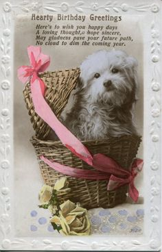 Birthday--Dog in Basket with greeting.  REally cute dog.