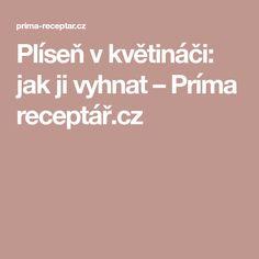 Plíseň v květináči: jak ji vyhnat – Príma receptář.cz