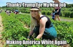 A Republican Dream Come True