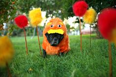 It's not about what it is, it's about what it can become - Dr. Suess, The Lorax #Pug poog's next Halloween costume