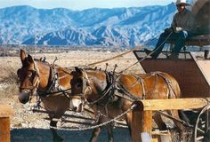 Palm Springs tours, COVERED WAGON TOURS Palm Springs California Palm Springs, CA Home