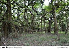 Dünya'dan ilginç ormanlar.