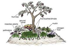"""Component plantings in a fruit tree guild create a """"miniature ecology"""" in a plot as small as 8'square"""