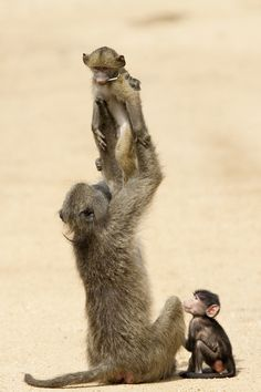 Happy family!  BelAfrique - Your Personal Travel Planner www.belafrique.co.za