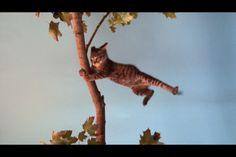 Jon Sasaki, Hang in There, 2012