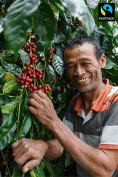 Like supporting small-scale and family farms? The average size of a Fairtrade coffee farmer's plot is just 3.46 acres (By comparison, the average size of a family farm in the US is 231 acres).