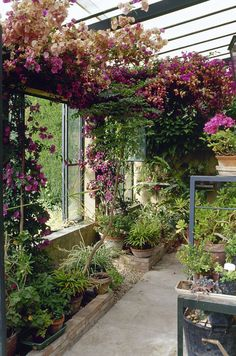 Plants Photos, Design, Ideas, Remodel, and Decor - Lonny #conservatorygreenhouse