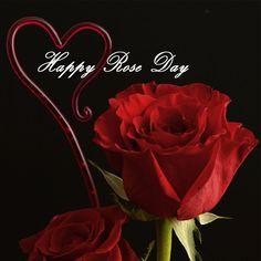 Rose Day - happy valentines day letter - http://www.happyvalentinesday.co.in/rose-day-happy-valentines-day-letter/  #FreeOnlineGreetingCards, #FunnyEcards, #HappyValentineDayGreetings, #HappyValentinesDayVideos, #QuotesForValentines, #ValentinesDayImagesFreeDownload, #WeddingAnniversaryCards