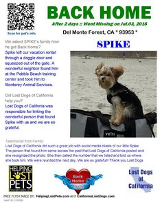 """#BACKHOME Spike- #YorkshireTerrier from #DelMonteForrest #CA has been reunited with his family. Lost 7/3/16. Back home: 7/5/16. """"Spike left our vacation rental through a doggie door and squeezed out of the gate. A wonderful neighbor found him at the Pebble Beach training center and took him to Monterey Animal Services. """" Welcome home Spike! #lostdogsca #HelpingLostPets"""