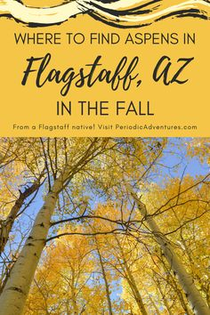 Arizona brings images of the hot desert but in Flagstaff, there are actual seasons! Read my guide on where to see the yellow aspen trees in the fall. Usa Travel Guide, Travel Usa, Travel Guides, Travel Tips, Flagstaff Arizona, Arizona Usa, Us Travel Destinations, Places To Travel, Aspen Trees