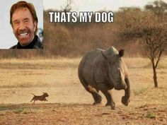 Chuck+Norris+Jokes | Chuck Norris funny pictures