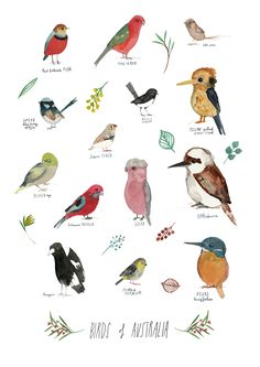 A giclee print of a series of birds I have recently painted as part of my 100 day project painting birds.  These are all amazing Australian birds, collected and named in a giclee print on beautiful velvety 310 GSM archival stock, printed with quality archival inks. Sizes available are A3 or A4, JessesMess Melbourne A4 $35 A3 $50