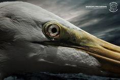 Sea Shepherd Conservation Society: Tears, Egret