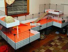 Image result for cages for my hedgehog