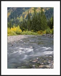 Montana, Glacier National Park, Cottonwood and Birch, and Conifers in Upper Mcdonald Valley Photographic Print by John Barger at Art.com