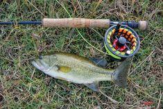 La decisión Fish, Fishing, Ichthys