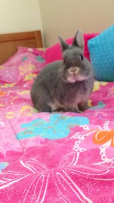 Bunzy is a bunny model. Netherland dwarf