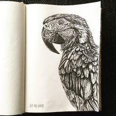 Papagayo. Drawing. Black and white.