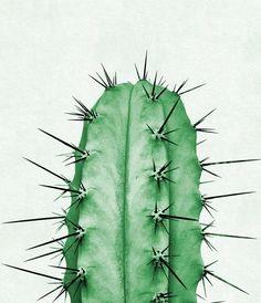 Cactus Plant Print Cactus fotografie groene Wall Art door TaiPrints