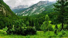 Landscapes nature forest (2100x1200, nature, forest)  via www.allwallpaper.in