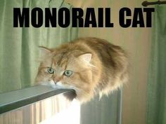 Get a Monorail Cat funny picture from Cats. You can get dozens of other funny pictures from Cats. Here are some samples of funny words: monorail, cat Funny Cat Photos, Funny Captions, Funny Cat Memes, Funny Pictures, Funny Images, Memes Humor, Funny Humor, Funny Bunnies, Cute Cats