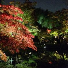 結局高台寺のライトアップとか見ちゃったしそれにしても枯山水にプロジェクションマッピングとか攻めてるわ #autumnleaves in #kyoto #japan #travelgram #travel