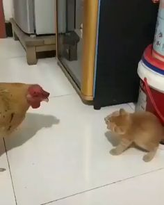 Cute Funny Animals Video Ummm gonna smack you…I will, well I umm will Funny Animal Videos, Cute Funny Animals, Funny Animal Pictures, Funny Cats, Cats Humor, Animal Pics, Cute Kittens, Cats And Kittens, Animals And Pets