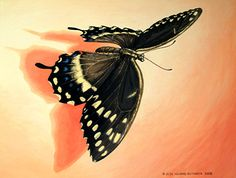 Insect Portrait - Swallowtail Butterfly Pastel Painting By Wildlife Artist Jessa Huebing-Reitinger - Project Insect