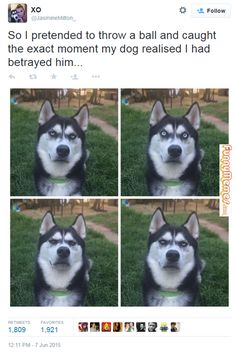 That moment you realize your owner #lies about the #tennis #ball