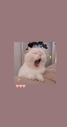 #cat #aestetic #cataestetic #cute