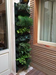 L'orto verticale di piante aromatiche per risparmiare acqua e spazio