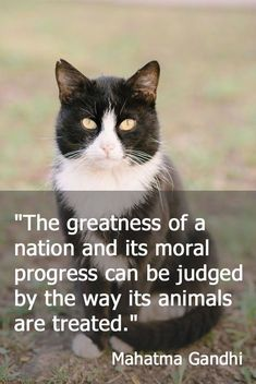 Feral Cat Day Special: 7 inspurrational quotes for proud lovers of feral cats! - What more to say other than we just LOVE cool stuff!