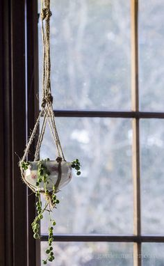 full shot of string of pearl in hanging planter teacup