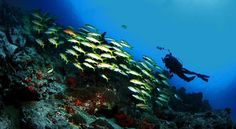 Bunaken,,, let,s come to here
