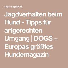 Jagdverhalten beim Hund - Tipps für artgerechten Umgang   DOGS – Europas größtes Hundemagazin Dog Treats, Beagle, Cesar Milan, Dog Things, Dog Stuff, Diy, Dog Care, Pooch Workout, Hunting