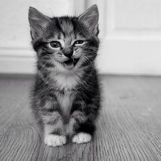 So a cute kitty ...