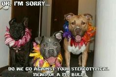 October is Pit Bull Awareness Month.