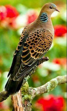 Que ave más bella