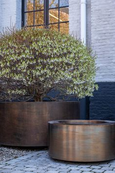 Tall Outdoor Planters, Outdoor Gardens, Earthy Home, Minimalist Garden, Plantation, Outdoor Living, Outdoor Decor, Garden Inspiration, Backyard Landscaping