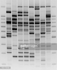 Foto stock : Comparativo Analisi del DNA
