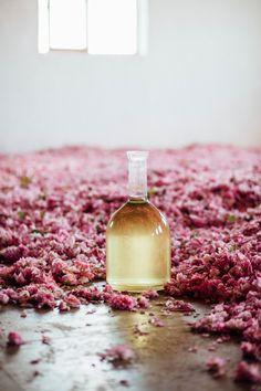 Tout ce que vous avez toujours voulu savoir sur le parfum - Lush France